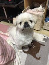 我が家の愛犬【わた】